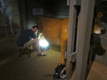 Andy milking a cow