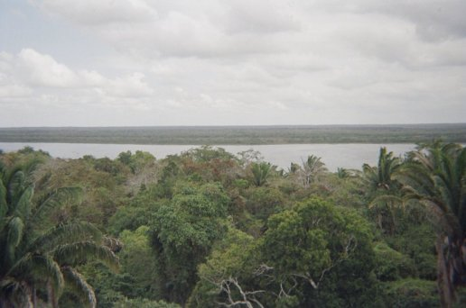 The view of the jungle from the top made the climb worthwhile.