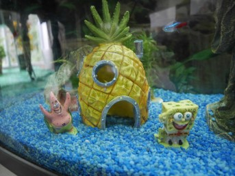 Sponge Bob's house in Simon's fish tank