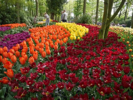 Look kids! More tulips!