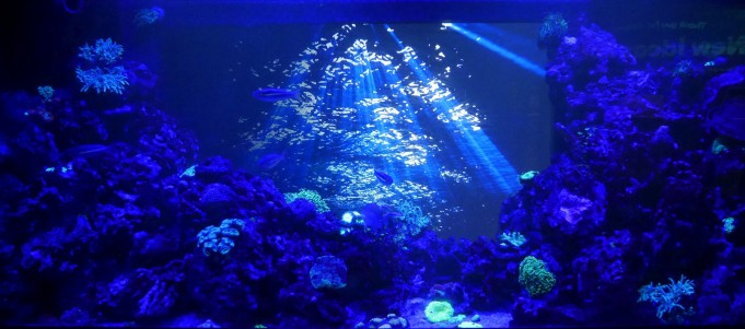 Coral reef at night