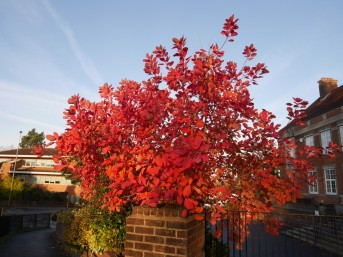pretty red tree
