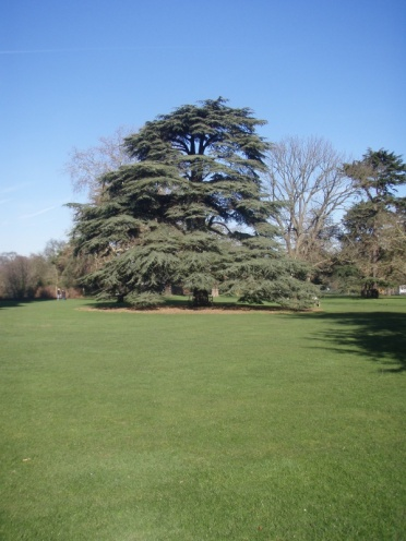 Aparently I take a picture of this tree every time we go to Kew!