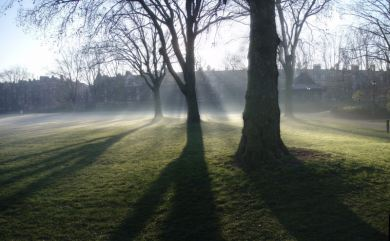 Morning mist in the park