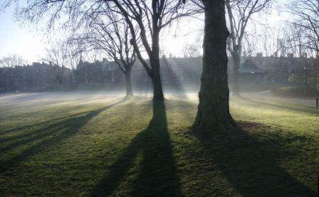 Morning mist in the park