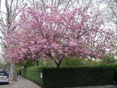 Mega-Blossom