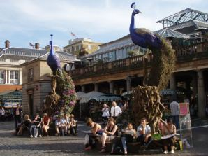 Peacocks in Covent Garden