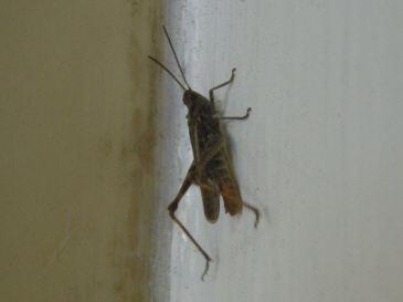 Grasshopper @ Idlewild