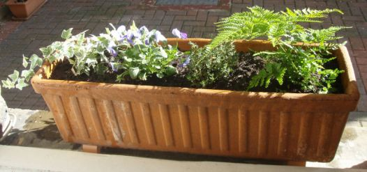 New Window boxes 1