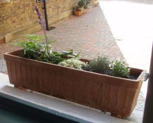 New Window boxes 3
