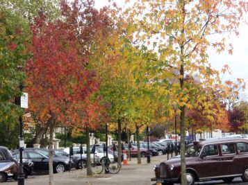 Autumnal trees...