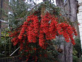 Berries (Lauderdale Road)