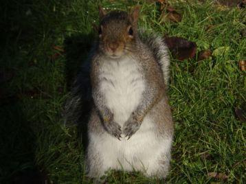 Squirrel @ Pad Rec