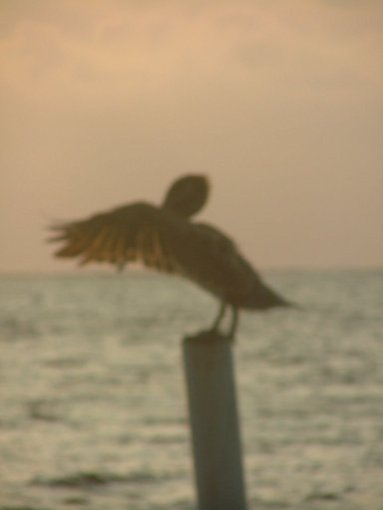 The pelican did Tai Chi from dawn...