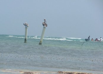 A couple of pelicans hung out on posts at the end of our pier.