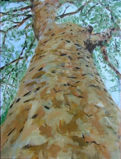 Plane Tree (30x40cm acrylic June 2005)