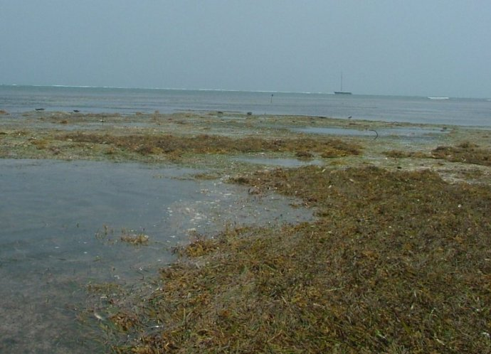 You can walk quite a ways out from the shore on the sea grass hardened sand...