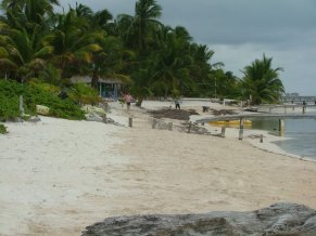 Every day they sweep up the sea grass from the beach in front of Sundivers and caye villas!!