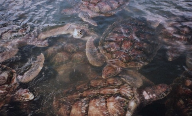 And a rather disturbing turtle farm