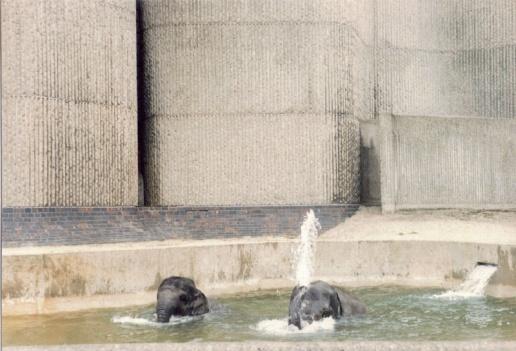 Elephant's bath