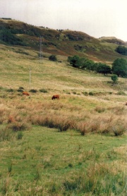 Scottish Longhair cattle