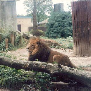 1988 - ZSL London Zoo