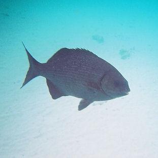 2004 - Bonaire (underwater)