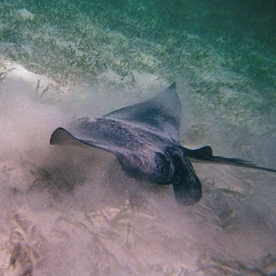 2005 - Belize (underwater)
