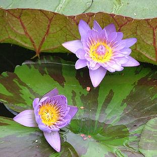 2005 - Kew (may)