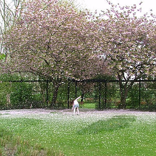 2005 - Paddington Recreation Ground thumb