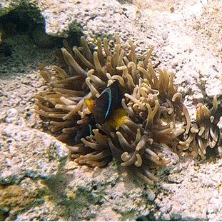 2006 - Jordan (underwater)