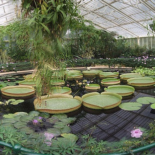 2007 - Kew (october) thumb