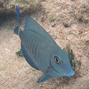 2010 - Antigua (underwater)