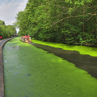 2011 - Canal pond scum
