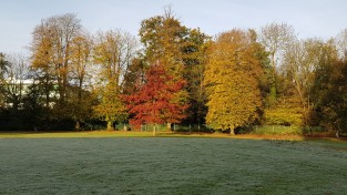 Autumn trees in Leatherhead