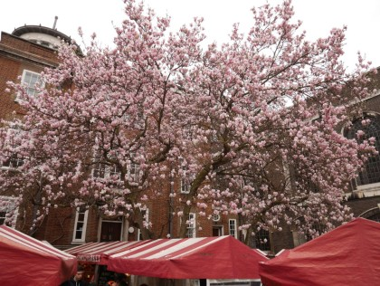 Magnolia on Piccadilly