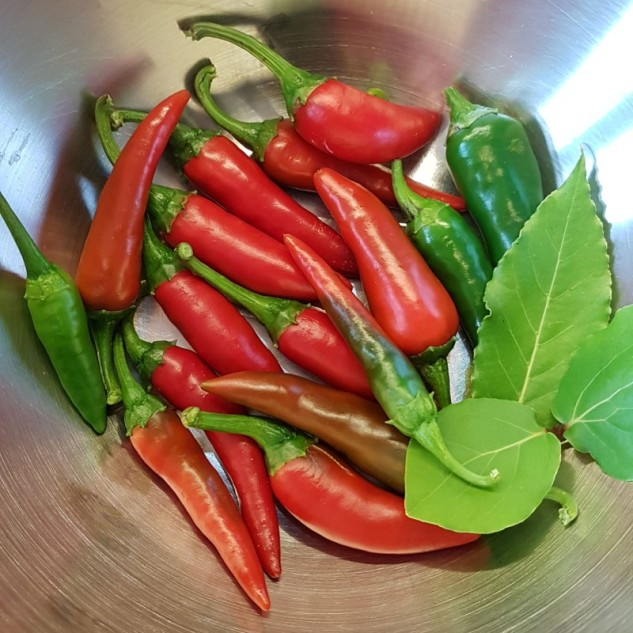 First pepper crop