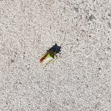 Found a bug