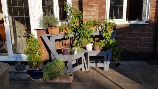 old plant pots