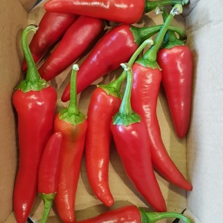 Third pepper crop