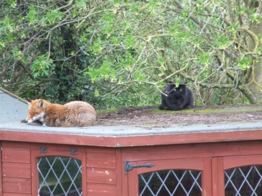 Shed pals