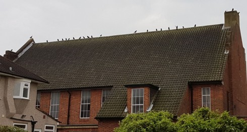 Crows on the church