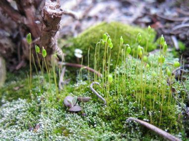04 Moss in the herb garden