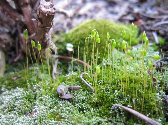 04 Moss in the herb garden