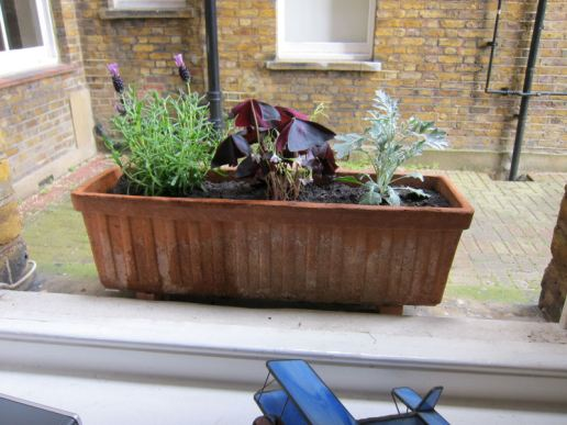 30 Re-planted windowboxes