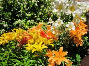 10 Luke & Daryl's lillies