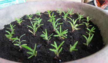 16 Rosemary's Babies