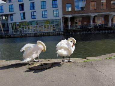Swans @ Camden Lock