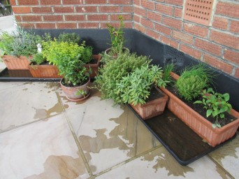Herbs - Window boxes from Castellain