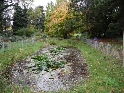 Shadbolt park pond
